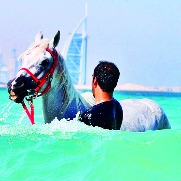 arab man and horse