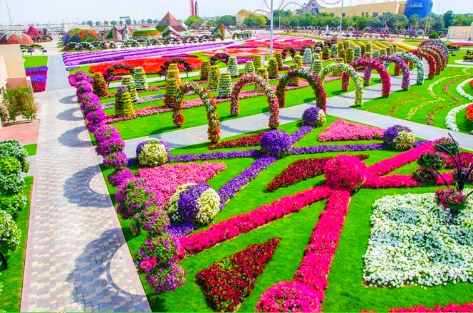 Dubai flower miracle