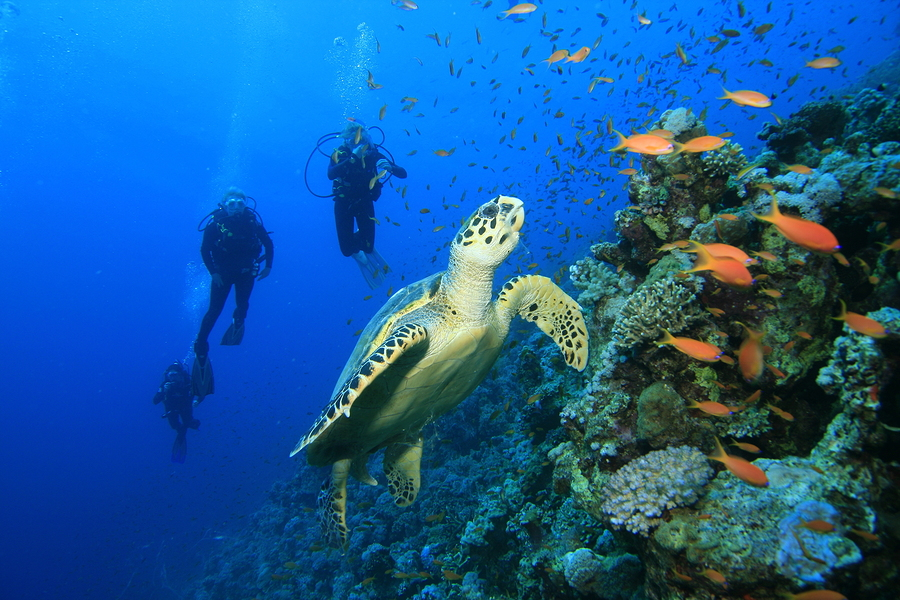 Explore marine life with scuba diving